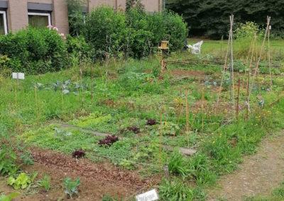 Les jardins partagés du château de Dobbeleer à Frasnes
