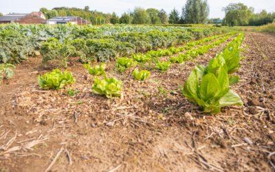 Appel à candidatures Espace test Jardins d'Agricoeur