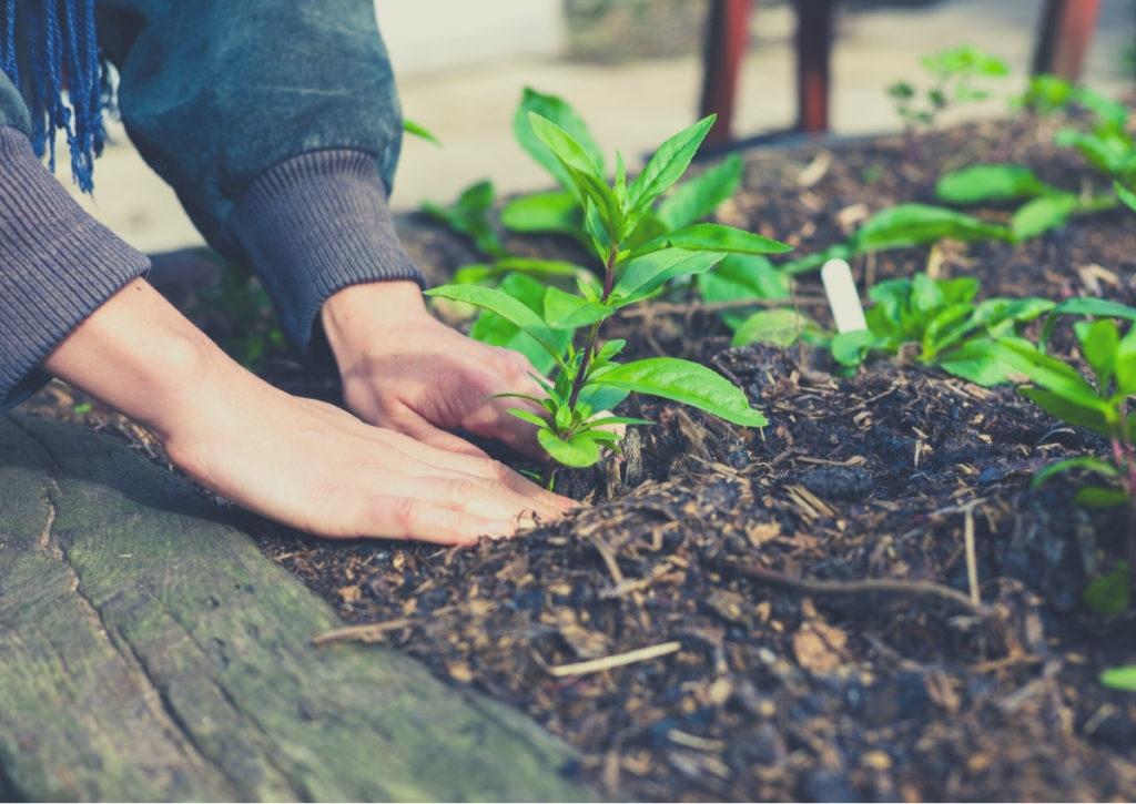 Les Ateliers des Jardins d'Agricoeur : programme 2021